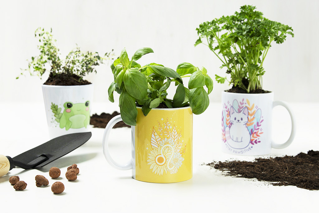 herbs planted in mugs